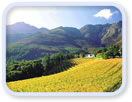 Half day Winelands Tour (mornings)